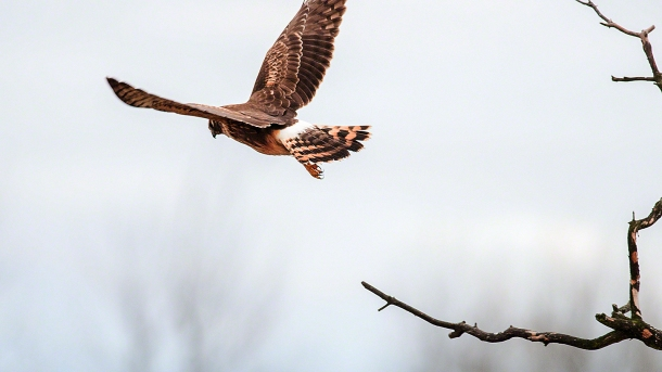 En route to dinner?(copyright Glenn Nelson)