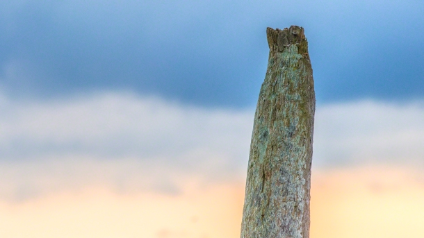 The setting sun provides an interesting backdrop.(copyright Glenn Nelson)