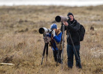 Properly geared bird photographers at Boundary Bay, B.C.