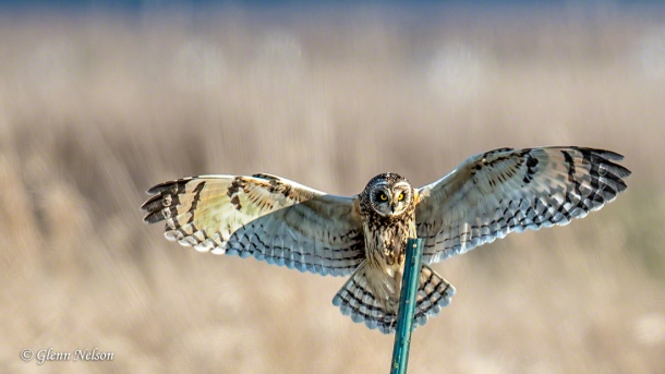 This version is a little less tightly cropped than the one in the right margin of this site.
