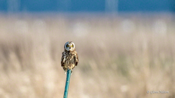 "How can you not look at this and hear Roger Daltrey beling out, ""Who-ooo are you? Hoo, hoo, hoo, hoo."""