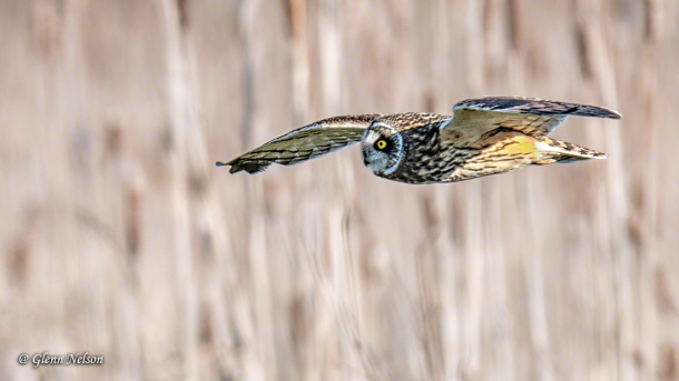 See what I mean? Torpedoes with wings.