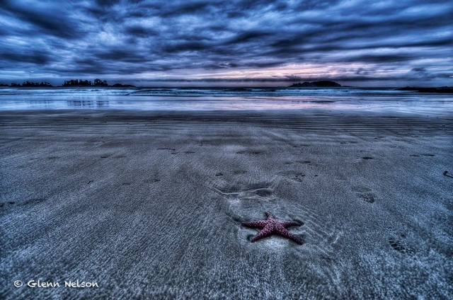 The sun and the tide is gone, leaving this sea star behind on Chesterman Beach.