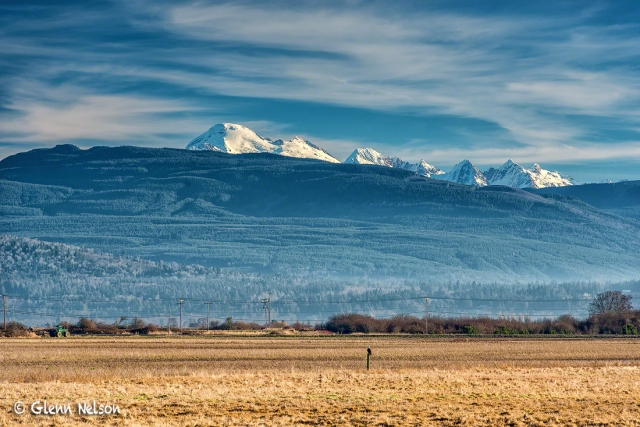 The Samish Flats provides a spectacular setting to view wintering raptors, including Bald Eagles.