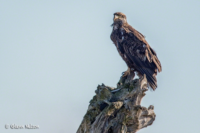 Look closely and you'll see a feather at the Eagle's feet.