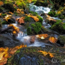 NOVEMBER: Fall has fallen at Mineral Creek, near the Hoh River in Olympic National Park.